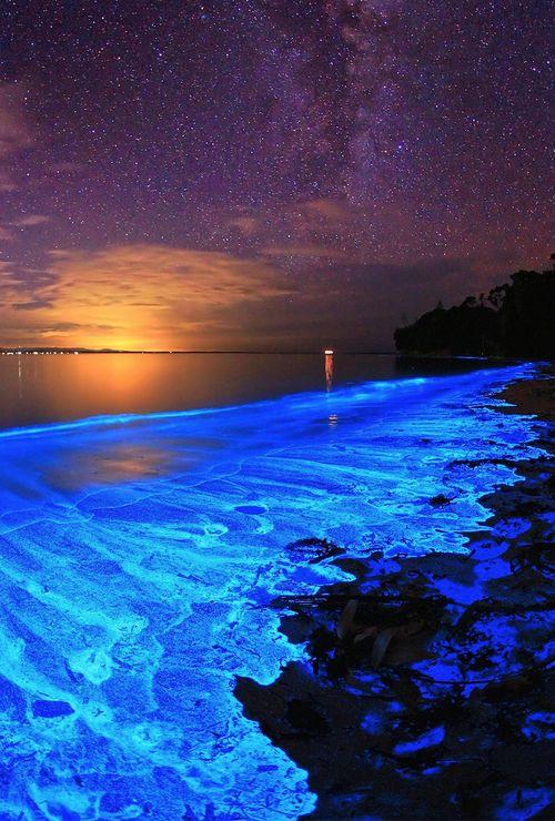 australian coast algal bloom