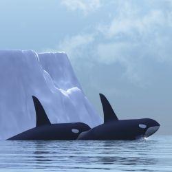 whales in artic ocean